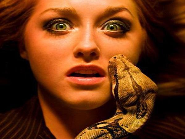 Mơ bị rắn cắn là điềm lành hay dữ, đánh số mấy?