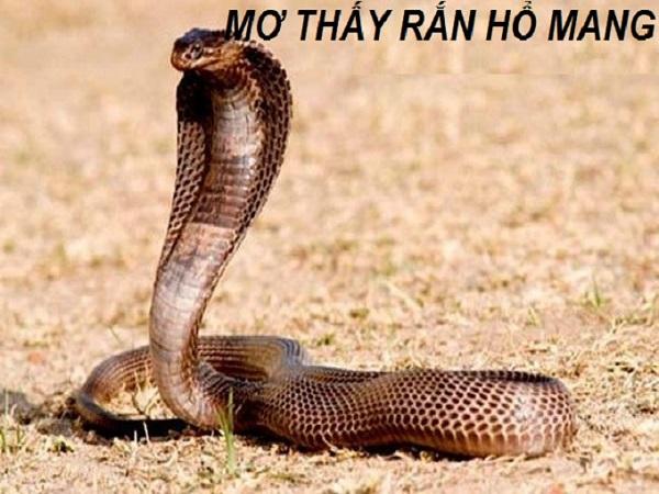 Mơ thấy rắn hổ mang là điềm tốt hay xấu? đánh số mấy chắc ăn nhất?