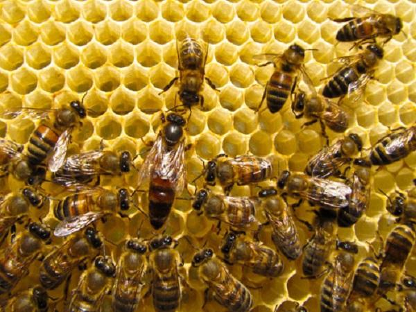 Mơ thấy tổ ong là điềm gì? Đánh lô đề con gì chuẩn nhất?