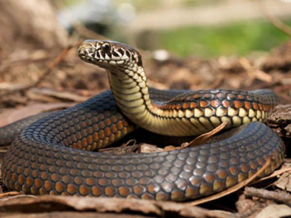 Mơ bắt được rắn điềm lành hay dữ - Đánh con đề nào vào bờ?