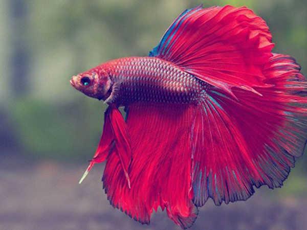 Mơ thấy cá là điềm báo gì, con số phát tài là số mấy?