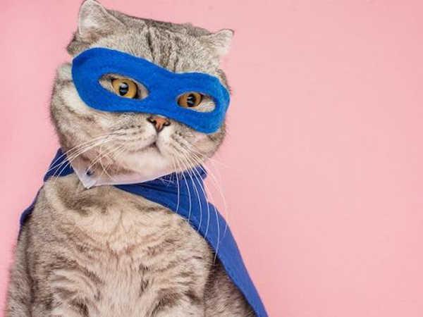 Mơ thấy mèo là đen hay đỏ, đánh con số nào chắc chắn phát tài?