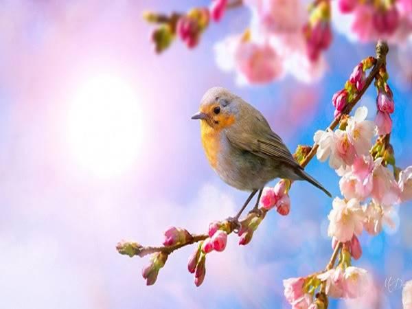 Mơ thấy mùa xuân có ý nghĩa gì và đánh con gì chắc ăn?