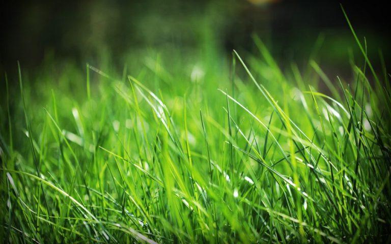 nằm mơ thấy cây cỏ