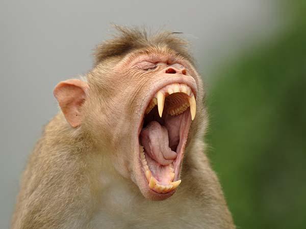Nằm mơ thấy con khỉ đánh con gì dễ trúng, có điềm báo gì