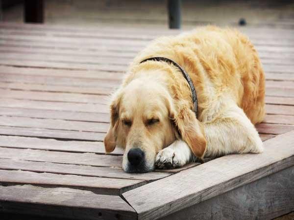 Nằm mơ thấy con chó đánh con gì dễ trúng, có điềm báo gì
