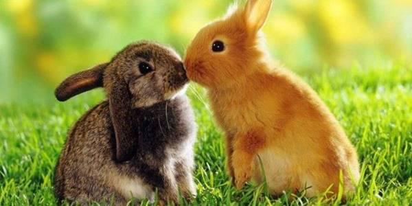 Nằm mơ thấy con thỏ là điềm báo trước gì? đánh số mấy