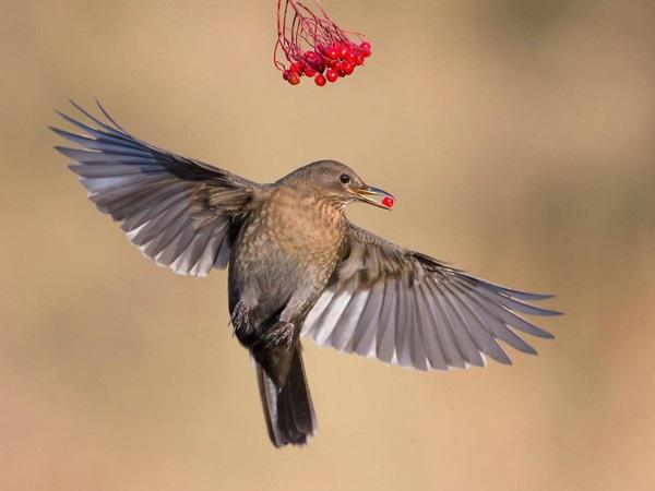 Nằm mơ thấy chim bay chơi xổ số con gì may mắn