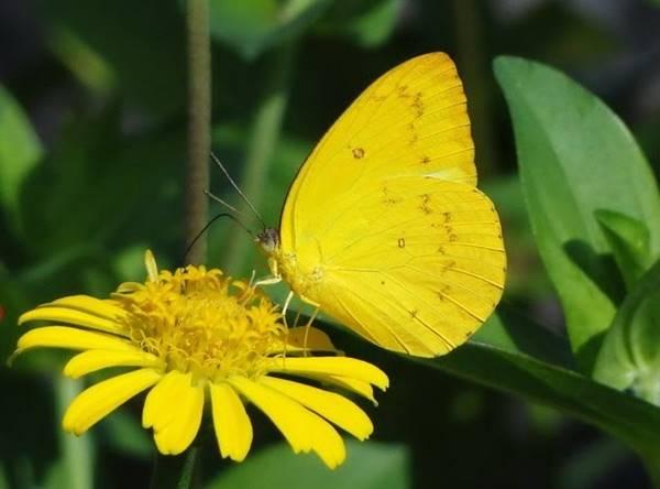 Nằm mơ thấy bướm bay vào nhà đánh con gì? đánh số mấy